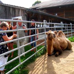 Ausflug 2017 066 spycher gruppe kamel b