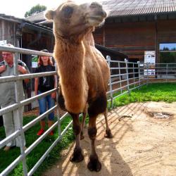 Ausflug 2017 070 spycher gruppe kamel b