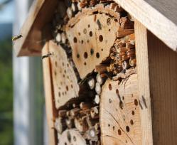 Bienenhotel nach anbetriebnahme geschnitten 1053 x 862