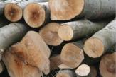 Buchenholz aus duden de
