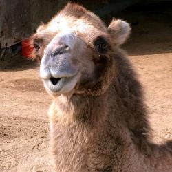 Img 6826 spycher kamel b